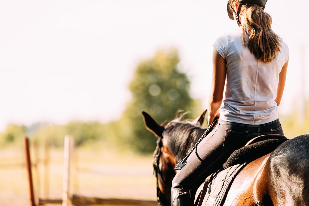 adestramento-equinos