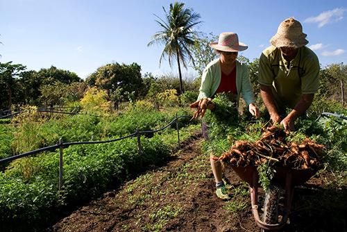 capa-salario-rural